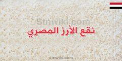 طريقة نقع الرز المصري