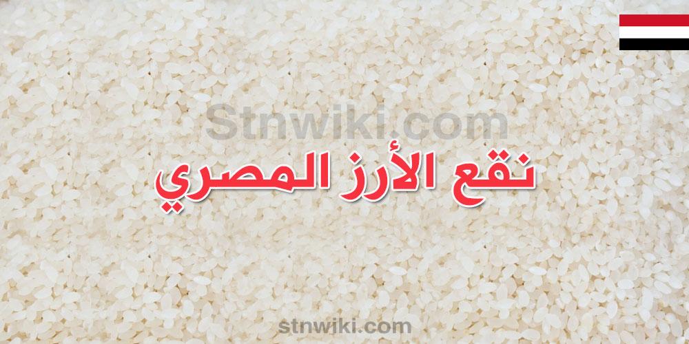 نقع الرز المصري